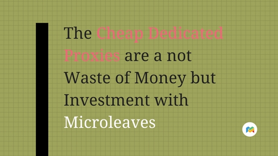 The Cheap Dedicated Proxies are a not Waste of Money but Investment with Microleaves